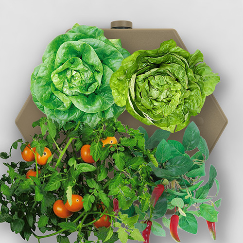 farm-in-a-box-veggies-500