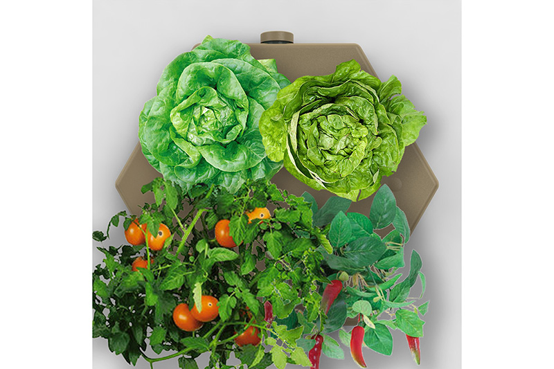 Farm in a Box with Plants